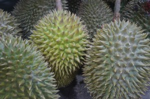 durian-fruit-2720388_1280