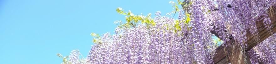 http://minnano-kyukaku.com/?p=542